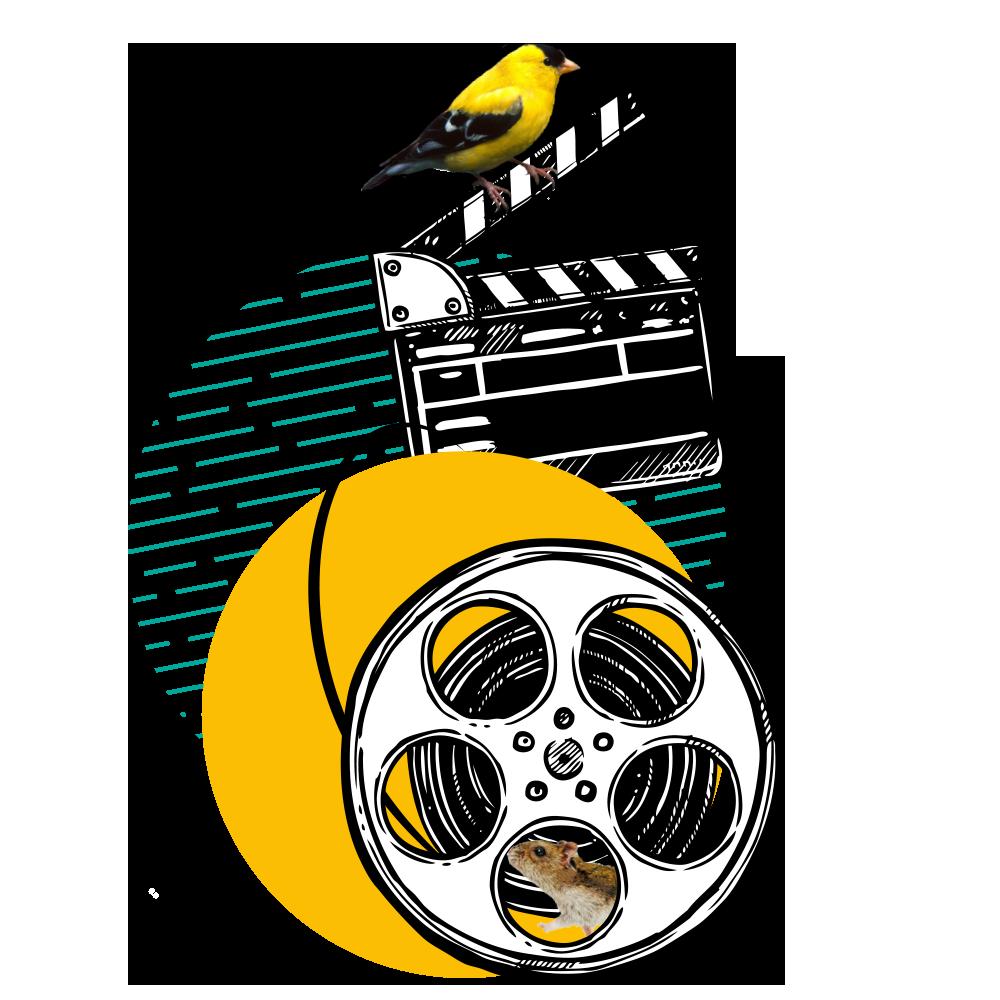 Filmski festival mladih